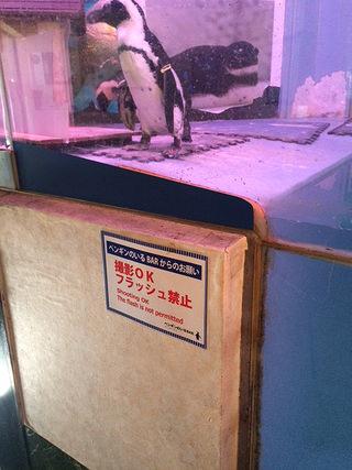 ペンギンのいるBAR沖縄